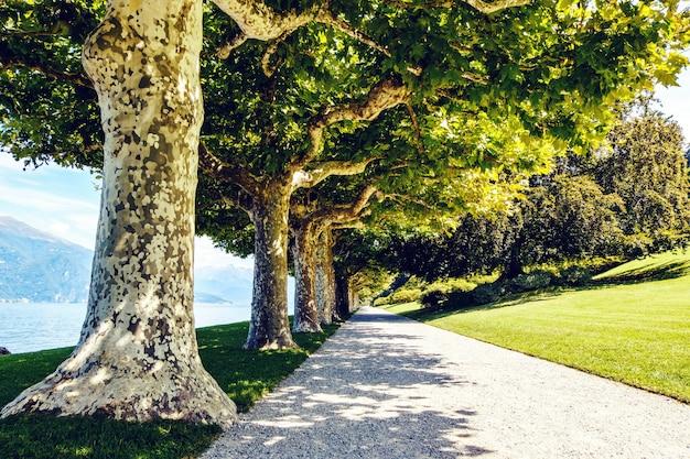 Linea di alberi e strada nel lago di como
