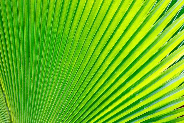 Linee e trame di foglie di palma verde