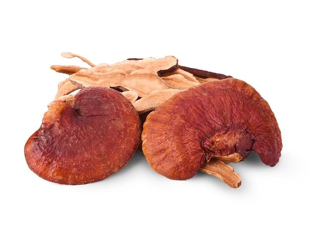 Il fungo lingzhi, il fungo reishi ha una medicina di proprietà.