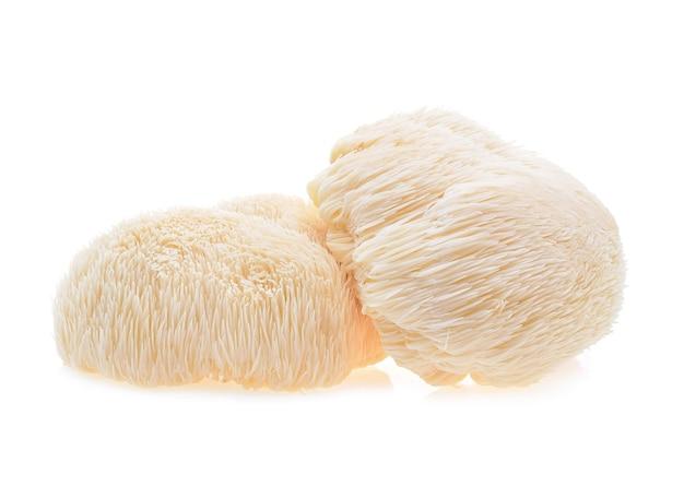 Fungo di criniera di leone isolato su priorità bassa bianca.