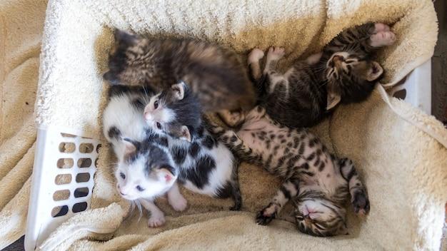 Piccoli gattini di colori assortiti seduti in una scatola, sochi