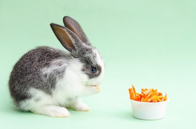 Piccolo coniglio del bambino che mangia carota