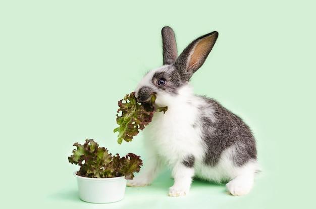 Piccolo coniglio del bambino che mangia verdure fresche, foglie di lattuga.