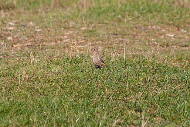 Uccellino nell'erba in un parco nelle dolomiti