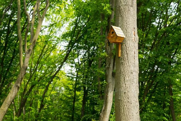 Casetta per uccellini su un albero alto sullo sfondo del parco per il tema della natura