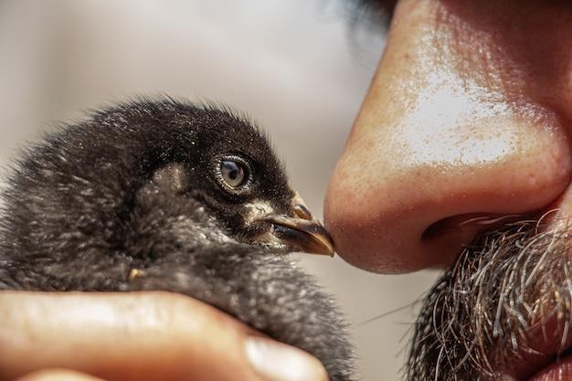 Il piccolo pulcino nero bacia il naso di un uomo con un becco