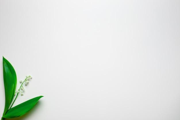 Piccolo bouquet di mughetto nell'angolo sinistro con spazio vuoto piatto con sfondo bianco...