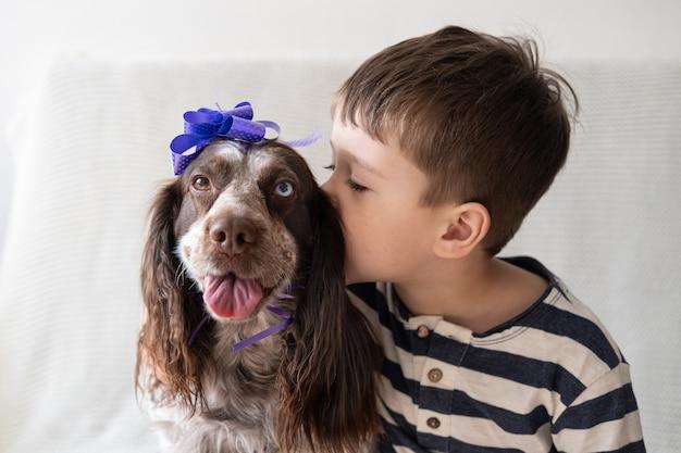 Il ragazzino abbraccia il russian spaniel cioccolato merle diversi colori occhi cane divertente che indossa un fiocco in nastro sulla testa. regalo. vacanza. buon compleanno. natale.