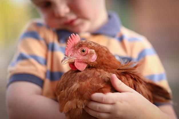 Ragazzino che tiene in braccio e coccola il pollo isa brown