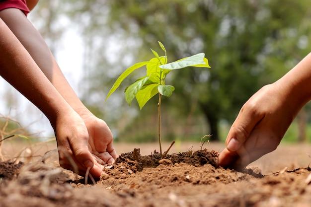 La mano del ragazzino che aiuta un adulto a piantare un piccolo albero nel giardino