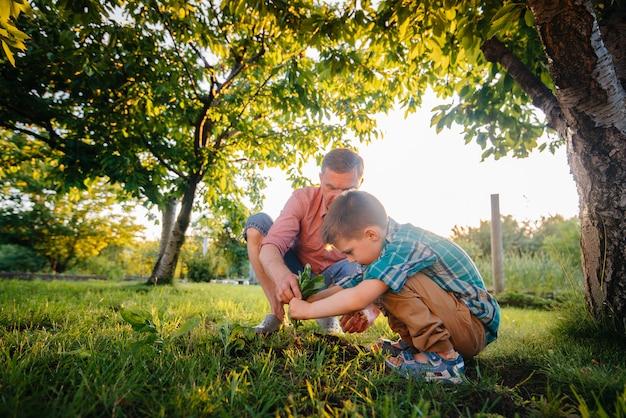 Fratellino e sorella stanno piantando piantine con il padre in un bellissimo giardino di primavera al tramonto.