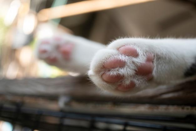 Le zampe del piccolo gatto sembrano carine sul tavolo bianco.
