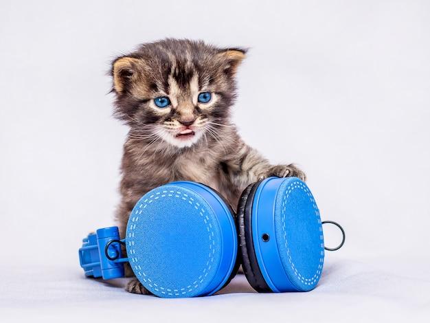Un piccolo gattino affascinante siede vicino alle cuffie. ascolta la tua musica preferita. musica per rilassarsi. melomane_