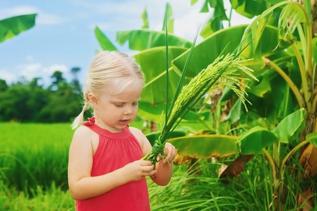 Piccolo bambino che esplora la natura - esaminando fascio di spighe di riso su un campo verde.