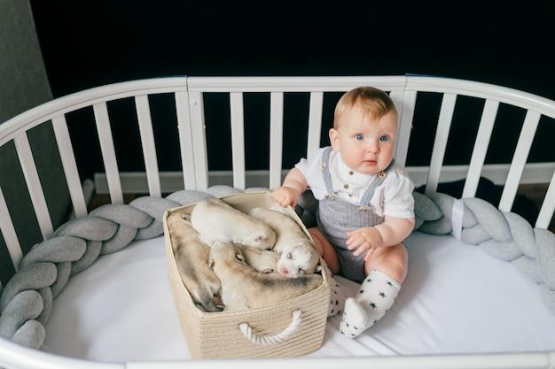 Piccolo bambino che siiting in culla con cuccioli di husky appena nati nella scatola.