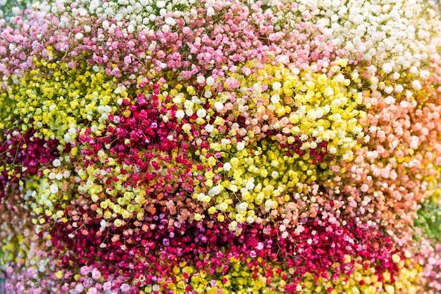 Primo piano di sfondo di piccoli fiori colorati