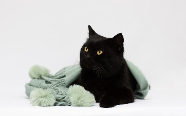 Piccolo gatto nero carino su tessuto di seta bianca contro superficie bianca ritratto di un gatto domestico con pelliccia colorata in tabby, sciarpa avvolta