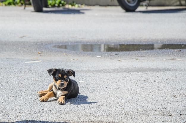 Piccolo cucciolo nero carino sdraiato sulla strada.
