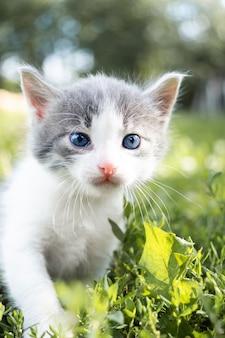 Piccolo gattino grigio lanuginoso sveglio in erba verde in una giornata estiva. ritratto di un gattino in natura.