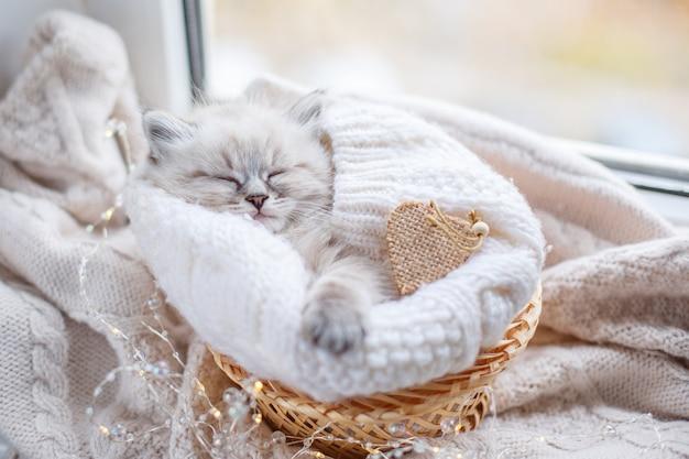 Piccolo gattino carino che dorme in un cestino, cuore