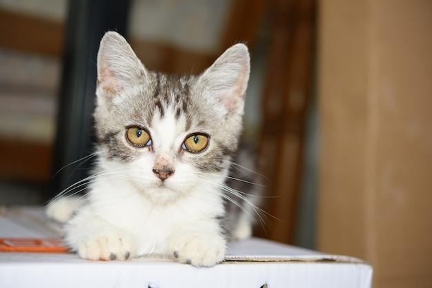 Un piccolo gattino carino si siede su una scatola di cartone