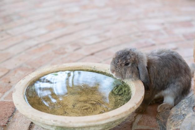 Piccolo coniglio carino in fattoria