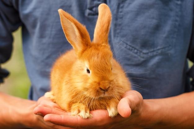 Piccolo coniglio carino seduto sulle sue mani