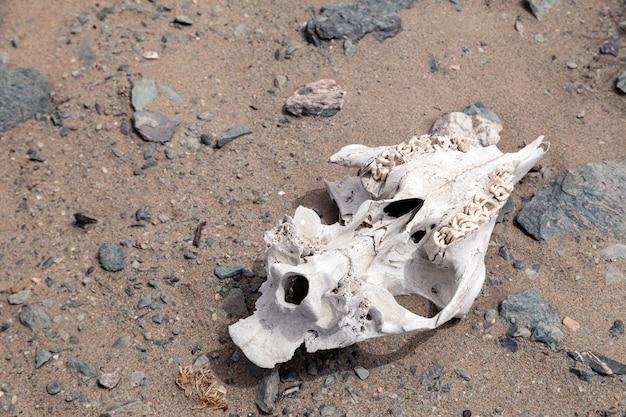 Piccola testa di animale morto sul pavimento