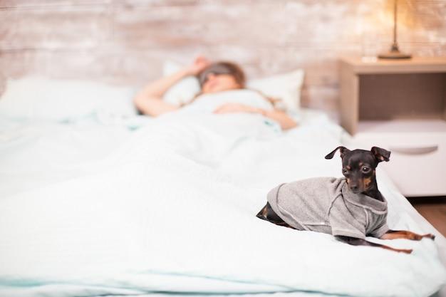 Cagnolino seduto comodo sul bordo del letto mentre una bella donna dorme con gli occhi coperti.