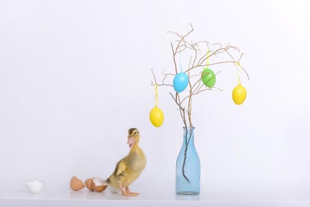 Piccolo anatroccolo e coperture delle uova e decorazione di pasqua