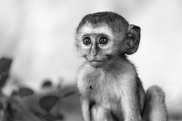 La piccola scimmia divertente sta giocando sul pavimento o sull'albero