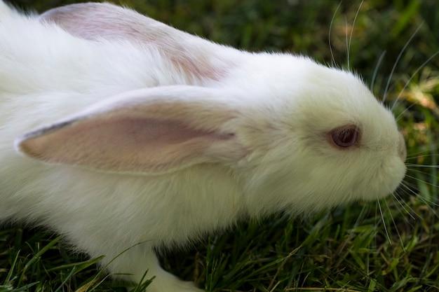 Piccolo coniglio divertente che corre sul campo in estate.