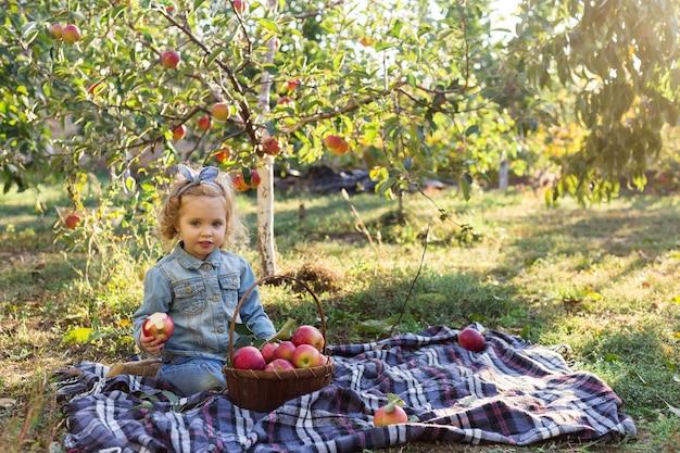 Bambina che mangia mela rossa organica matura nel meleto con cesto di mele al picnic