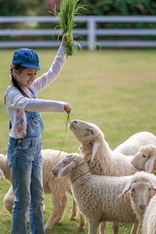Una bambina che dà da mangiare a pecore bianche