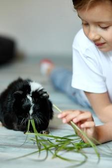 Bambina che tiene e alimenta cavia nera, animale domestico. i bambini danno da mangiare agli animali della cavia, vanno allo zoo o alla fattoria, si prendono cura degli animali domestici. resta in quarantena, ragazzo a casa.
