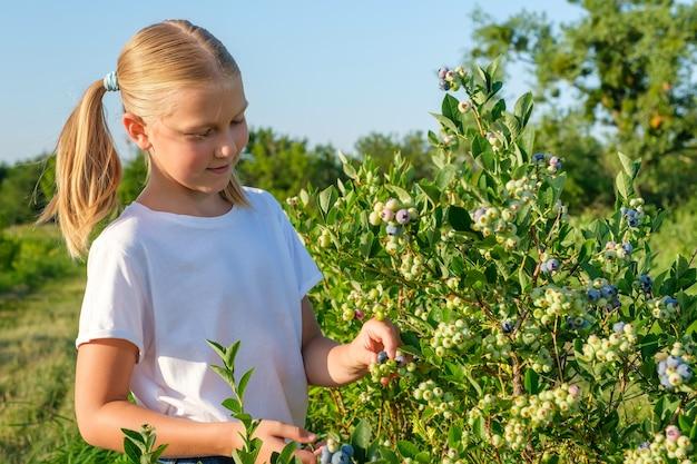 Bambina che raccoglie i mirtilli nell'azienda agricola biologica