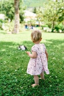 La bambina sta su un prato verde e guarda un gatto