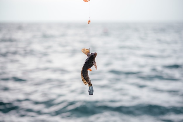 Piccolo ghiozzo pescato all'amo nel mare pesce preso all'amo