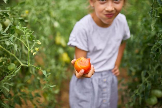 Bambina che mangia e si gode il delizioso raccolto di pomodori rossi biologici a casa, giardinaggio, produzione di alimenti vegetali. pomodoro in crescita, raccolto autunnale.