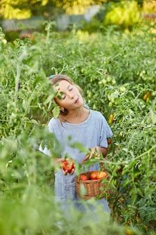 Bambina che mangia e si gode un delizioso raccolto di pomodori rossi biologici