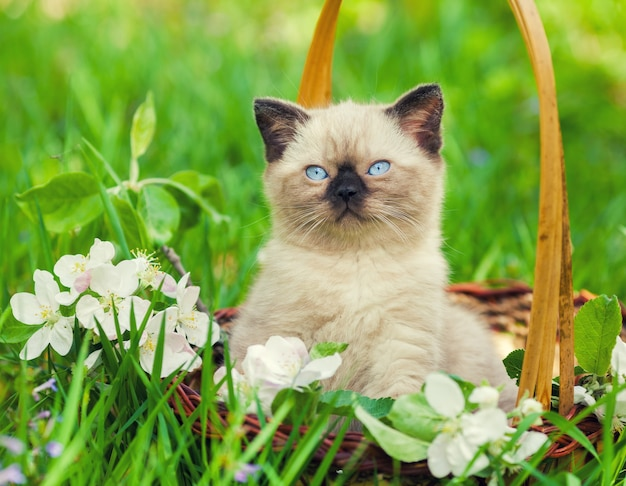Gattino in un cesto sull'erba con fiori