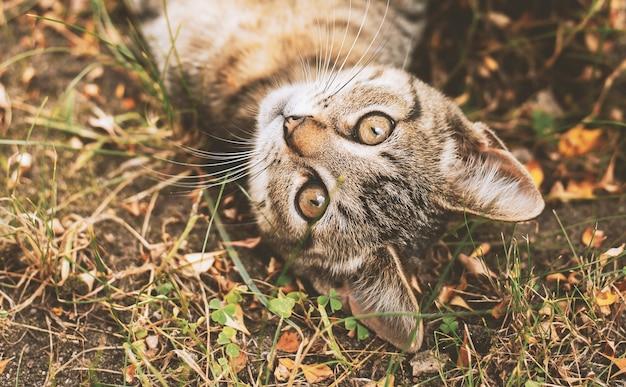 Il piccolo gattino si trova nel giardino