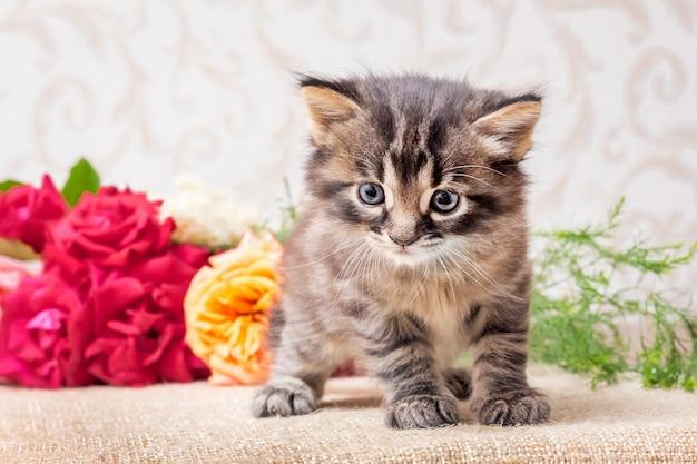 Un piccolo gattino vicino a un bouquet di fiori. rose per i saluti con una vacanza. vendita fiori_