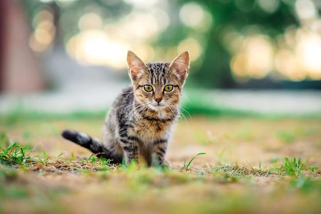 Gattino all'aperto