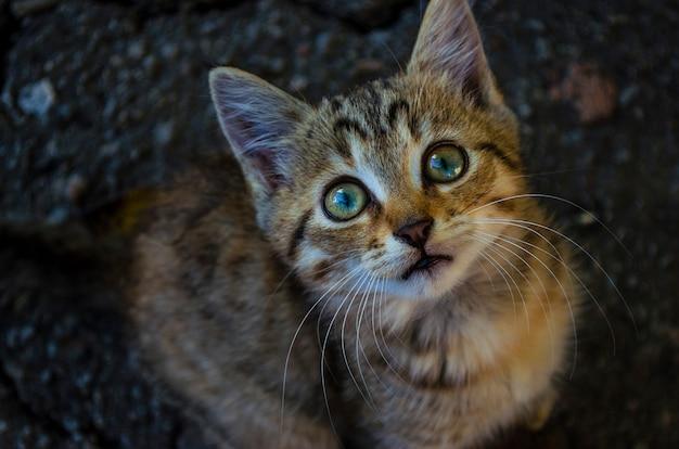 Il piccolo gattino sul marciapiede guarda in alto