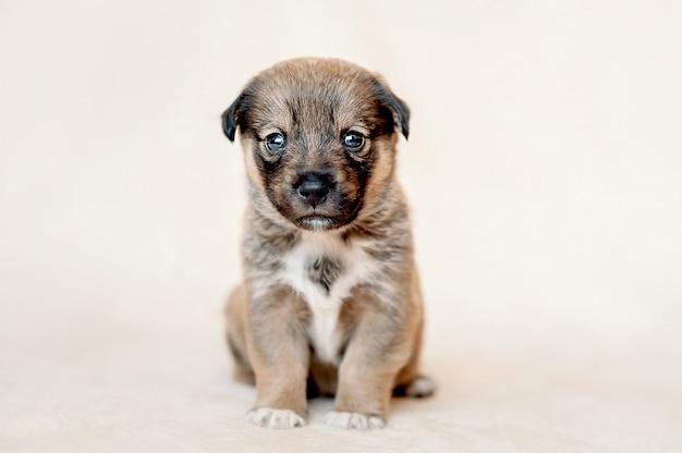 Piccolo cucciolo meticcio in attesa di una nuova casa