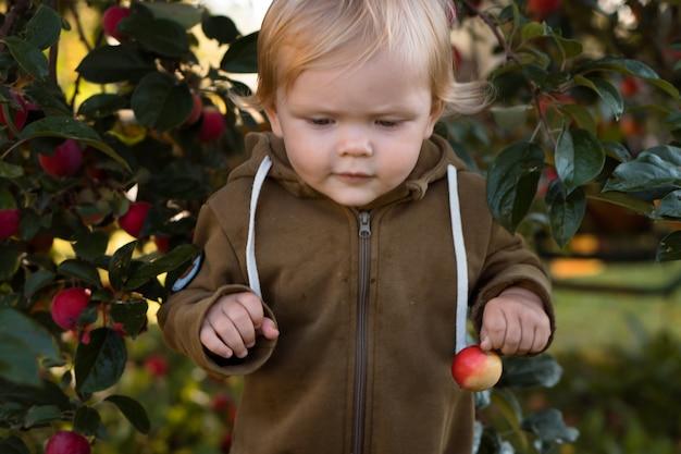 Bambina di un anno che raccoglie mele in giardino