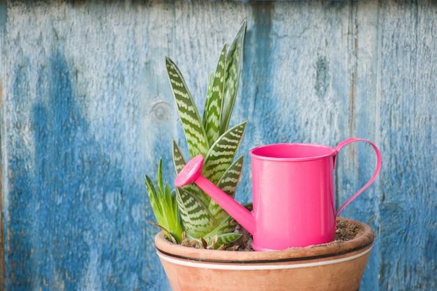 Piccola irrigazione rosa e succulenta. sfondo blu vintage