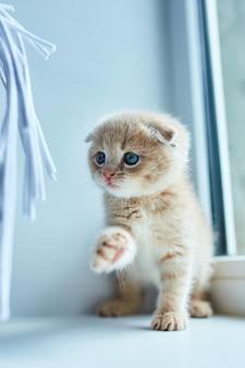 Gattino giocoso a casa vicino alla finestra.
