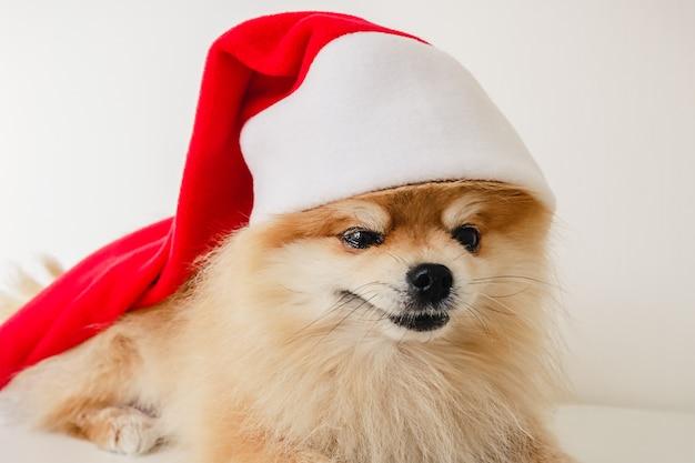 Piccolo cucciolo di cane di pomerania in cappello rosso di babbo natale a natale